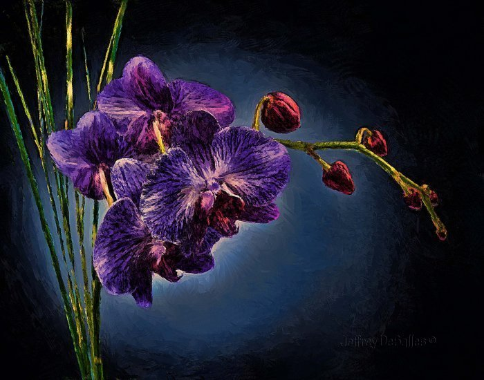dark purple orchids  all about orchid and tulip flowers, Beautiful flower
